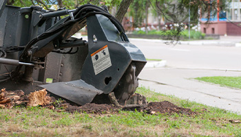 Stump Grinding Services in the Twin Cities