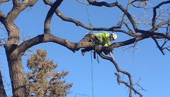 Tree Pruning Services in the Twin Cities