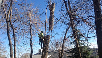 Tree Removal Services in the Twin Cities