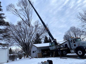 Crane-Assisted Tree Removal, Cottage Grove, MN