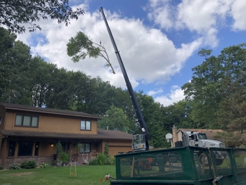 Crane-Assisted Tree Removal, Mendota Heights, MN