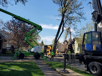 Crane-Assisted Tree Removal in Shoreview, MN