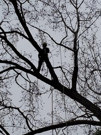 Tree Pruning in Woodbury, MN