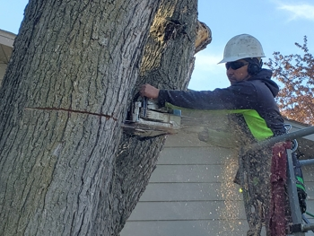 Tree Removal in Eagan, MN