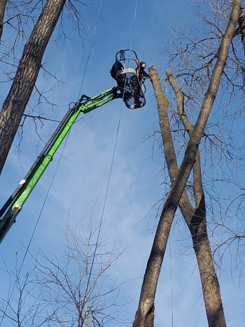 Tree Removal with Lift, Arden Hills, MN